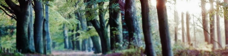 Alle vergaderlocaties centraal en bosrijk gelegen